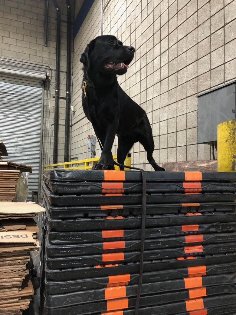 K9 Anaji from Marion Jones
