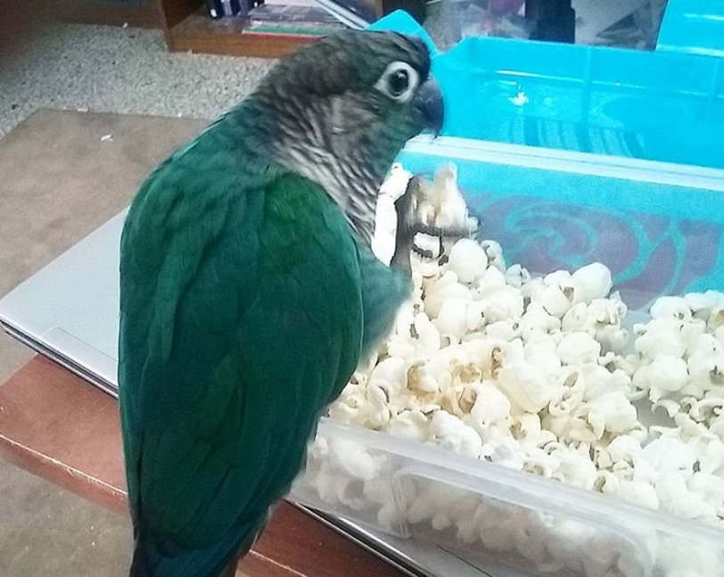 Orion and popcorn